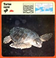 TORTUE CARET  Reptile   Animaux Animal Fiche Illustree Documentée - Animales