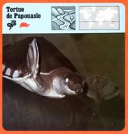 TORTUE DE PAPOUASIE Reptile Animaux Animal Fiche Illustree Documentée - Animales