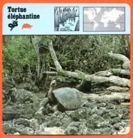 TORTUE ELEPHANTINE Reptile Animaux Animal Fiche Illustree Documentée - Animales