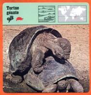 TORTUE GEANTE   Reptile   Animaux Animal Fiche Illustree Documentée - Animales