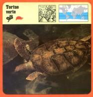 TORTUE VERTE Reptile Animaux Animal Fiche Illustree Documentée - Animales