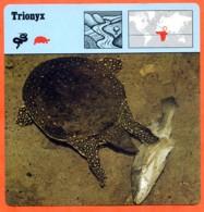 TRIONYX Tortue Reptile Animaux Animal Fiche Illustree Documentée - Animales