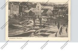 FOROYAR / FAEROERNE / FÄRÖER - THORSHAVN, Grindedrab / Whaling / Walfang - Islas Feroe
