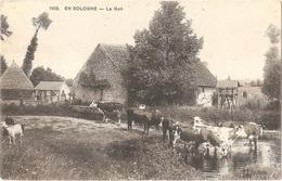 Dépt 45 - En Sologne - Le Gué - (Éditeur : L. Lenormand, Orléans) - Vaches, Chèvre - France