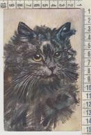 GATTI GATTO CAT MUSO IN PRIMO PIANO PRETTY KITTENS SERIE J 10 - Cats