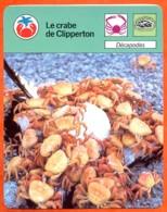 Le Crabe De Clipperton   Animaux  Crustacés Fiche Illustrée Cousteau  N° 52 - Animali