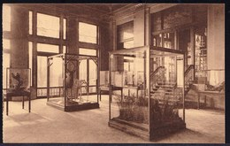 ANVERS - ANTWERPEN ---- ZOO - JARDIN ZOOLOGIQUE - PALIER DU MUSEE - TRAPPENPORTAAL - Antwerpen