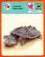 La Tortue Mata Mata Fiche Illustrée Cousteau  N° 35 - Animales