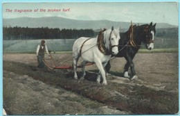 1552 - HARTMANN SERIES - THE FRAGRANCE OF THE BROKEN TURF - BOERENPAARD - TREKPAARDEN - DRAFT HORSES - CHEVAUX DE TRAIT - Caballos