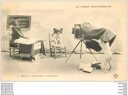 ANIMAUX. Le Chien Photographe Vers 1900 Série N° 1 - Dogs