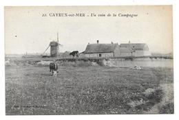 """80 CAYEUX Sur MER ( Somme )    Un Coin De La Campagne . """" Moulin-vaches -ferme """" - France"""