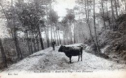 40 BISCAROSSE  La Route Qui Mène à La Plage ...... à L'époque Par La Forêt  .....  Attention Aux Vaches - Biscarrosse