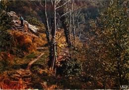 19 - Corrèze - Symphonie D'automne - Carte Neuve - Voir Scans Recto-Verso - France