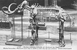 Carte Sépia Lyon Choulans Mammouth Muséum Zoo - Lyon