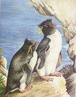 6 CP Neuves (Falkland Island) Manchots De Magellan Et Gorfou, Albatros, Cormoran, Otarie, Canard, Dessin Sonia Felton - Falkland