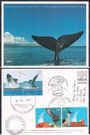 Argentina - 2007 - Lettre - Faune Antarctique - Baleine - Faune Du Sud - Parcs Nationauxs - Baleines