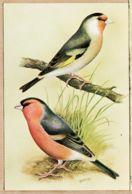 Ani039 CHARDONNERET Hybrides Hybriden Verdier Bouvreuil Distelvink Groenvink - LE MONDE Des OISEAUX  De Vogelwereld 9 - Uccelli