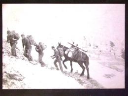 CARTOLINA -ALPINI -F.G. LOTTTO N°1001 - Cartoline