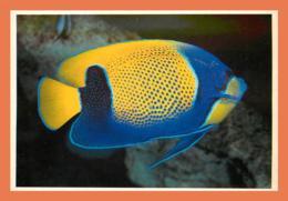 A678 / 077 17 - LA ROCHELLE Aquarium Euxiphipops ( Poisson ) - Non Classés