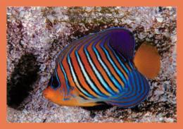 A678 / 083 17 - LA ROCHELLE Aquarium Pygoplite Diacanthus ( Poisson ) - Non Classés