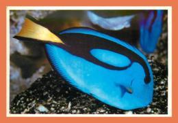 A678 / 073 17 - LA ROCHELLE Aquarium Poisson Chirurgien ( Poisson ) - Non Classés