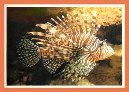 A678 / 071 17 - LA ROCHELLE Aquarium ( Poisson ) - Non Classés