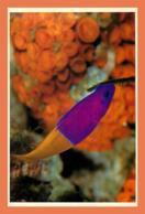 A682 / 665 17 - LA ROCHELLE Aquarium Poisson - Non Classés
