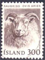 496 Iceland Chevre Goat (ISL-239) - Ferme