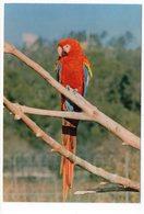 83 - Parc Zoologique De FRÉJUS - ARA MACAO   (A3) - Oiseaux