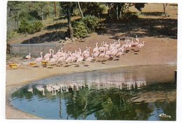 83 - Parc Zoologique De FRÉJUS - Les FLAMANTS ROSES (A4) - Oiseaux