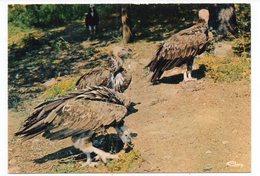 83 - Parc Zoologique De FRÉJUS - LES VAUTOURS (A5) - Uccelli