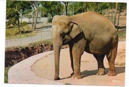 83 - Parc Zoologique De FRÉJUS - ELÉPHANT D'ASIE (A9) - Éléphants