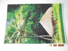 Koulnoue - Case Traditionnelle Melanesieone. Solaris Noumea - Cartes Postales