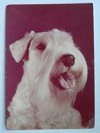 Dog  Chien  Hund / Sealyham Terrier /  Poland - Cani