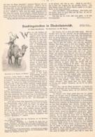 415 Niederösterreich Fasching St. Veit Artikel Mit 3 Bildern 1900 !! - Revues & Journaux