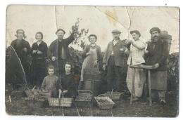 CESSET (Allier, 03) Carte Photo Groupe De Vendangeurs - Le Clos Des CRÉCHOUX - Octobre 1923 - Non Classificati
