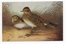 CPA ANIMAUX . OISEAUX . L'ALOUETTE DES CHAMPS   . ILLUSTRATEUR DELAPELSIER - Birds