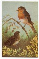 CPA ANIMAUX . OISEAUX . LE  ROUGE  GORGE  . ILLUSTRATEUR DELAPELSIER - Birds