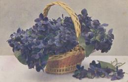 Fleurs - Panier De Violettes - Viola Odorata : Kaiserin Augusta - Flores