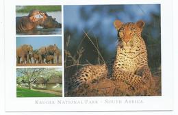 WIDLIFE.- KRUGER NATIONAL PARK.- SOUTH AFRICA. - Otros