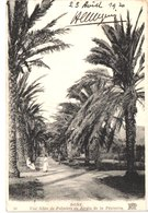 ALGERIE BONE - Nd 30 - Allée De Palmiers - Belle - Algérie