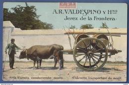 Jerez De La Frontera - A. R Valdespino Y Hno. - Vino Wine Vin - Carreta De Bois Conduciendo Mosto - España - Cádiz