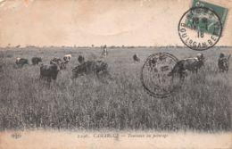 13-CAMARGUE-N°T2543-E/0051 - Autres Communes