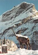 73-PRALOGNAN LA VANOISE-N°T2548-E/0005 - Pralognan-la-Vanoise