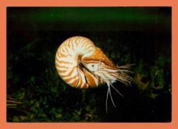 A610 / 257 56 - VANNES Aquarium Océanographique - France