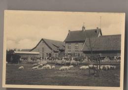 POPPEL - La Ferme - Boerenhoeve - Boerenbond St. Isidorushoeve - Ravels - Ravels
