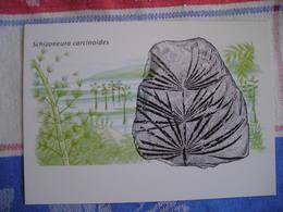 Répresentation Du Timbre, Schizoneura Carcinoides, Fossils (2) - Groenland