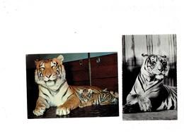 Lot 2 Cpm - TIGRE - Zoo - BASEL - LONDON - - Tigers