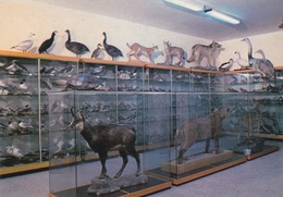 (C068) - CALIMERA (Lecce) - Museo Comunale Di Storia Naturale Del Salento - Lecce