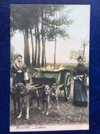 """Bruxelles--""""Laitières Flamandes Avec Leur Attelage De Chiens Posent Pour La Photo """" (2187)--1905 - Craft"""